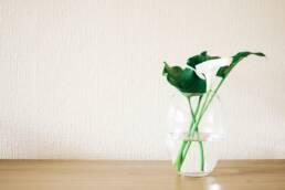 flower-lily-olutobi-habits