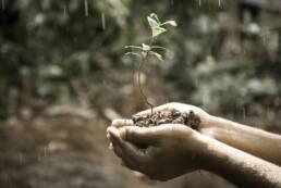 hope-plant-olutobi